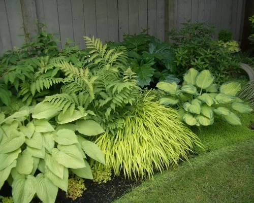 Hostas Ferns Home Design Ideas Pictures Remodel And Decor