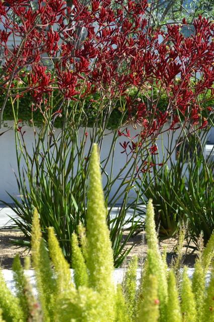 drought tolerant plants - eclectic