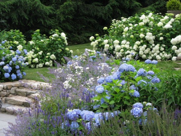 blue and white garden - traditional