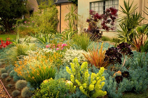 8 colorful drought-tolerant landscape