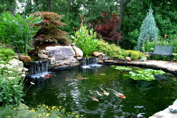 higher's koi pond - traditional