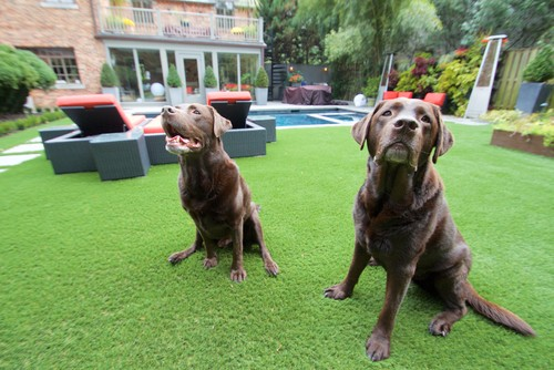 Pet-Friendly Artificial Grass Install at Contemporary Home in Washington, D.C.