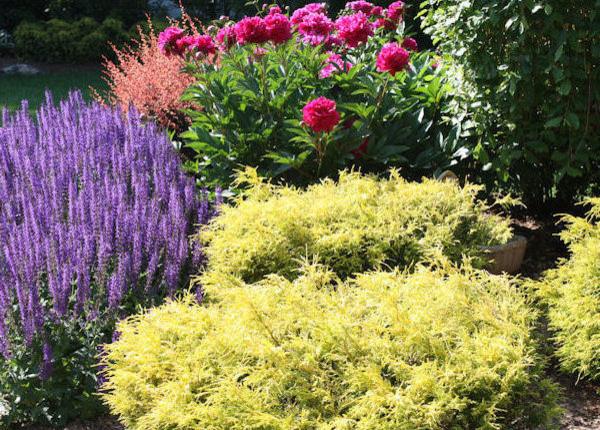 backyard evergreen & perennial