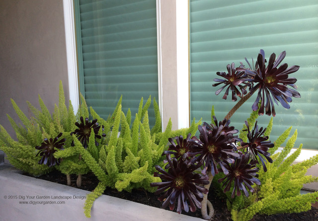 purple living rooms houzz bedroom and room furniture modern landscape with architectural plants succulents ...
