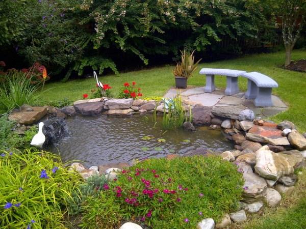 ecosystem ponds built