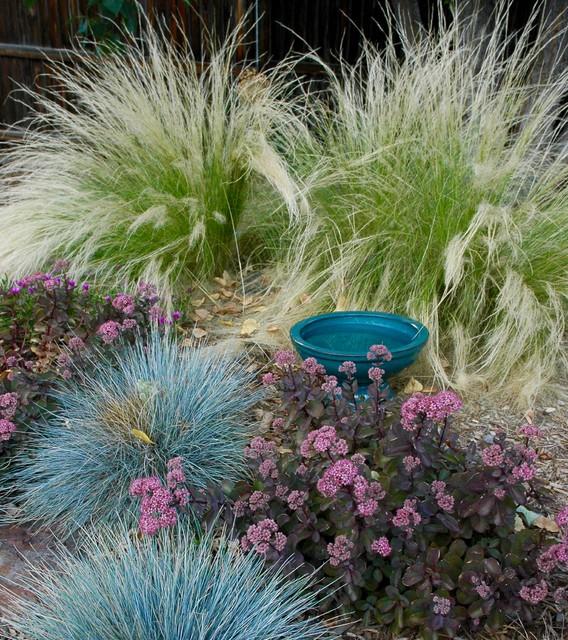 colorado springs xeriscape garden