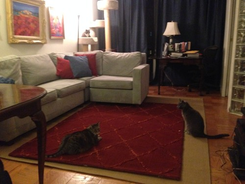 sofa cleaning nyc cost heated cover what colors go with royal blue carpet - vidalondon