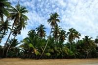 Palm Trees by the Seashore Wallpaper Wall Mural - Self ...