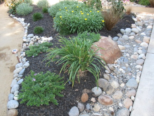 drought tolerant and maintenance
