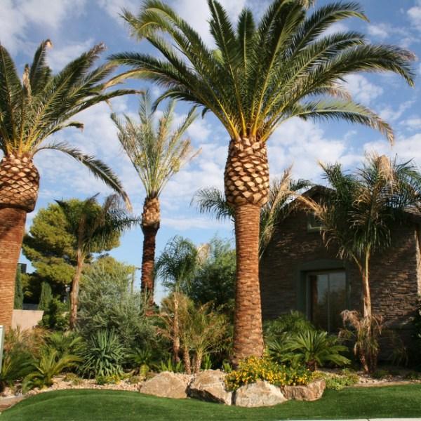 tropical oasis in desert