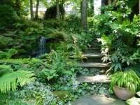 Woodland Garden - Eclectic - Landscape - Charlotte - by ...