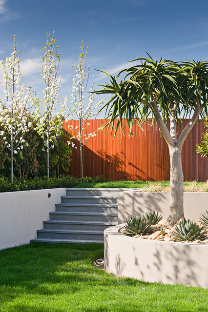 Top 10 Plants For Minimalist Gardens Houzz Au