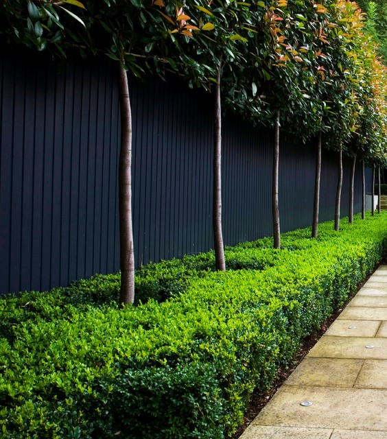 How Low Can Hedges Go? Discover Unusual Garden Borders