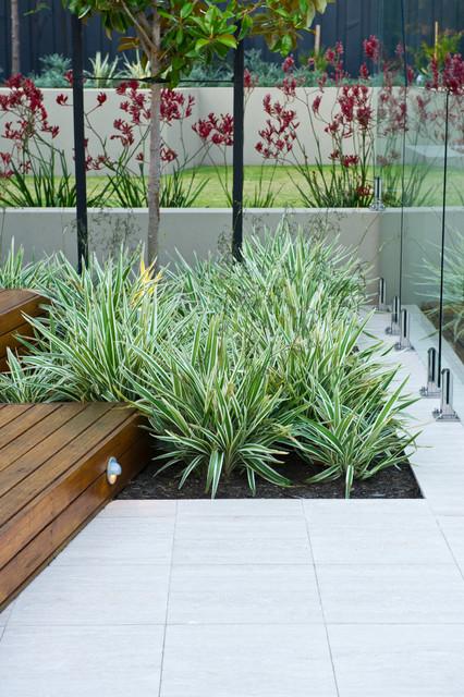 Dalkeith Garden Contemporary Pool Perth By Cultivart