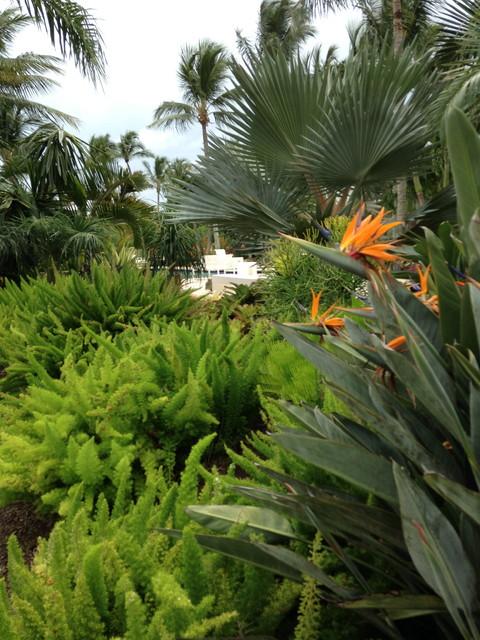 coastal tropical landscape - contemporary