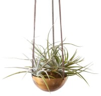 Gold Medal Hanging Planter - Contemporary - Indoor Pots ...