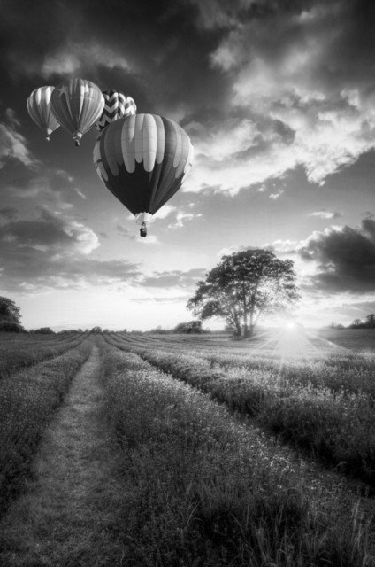Hot Air Balloons Over Lavender Fields Print