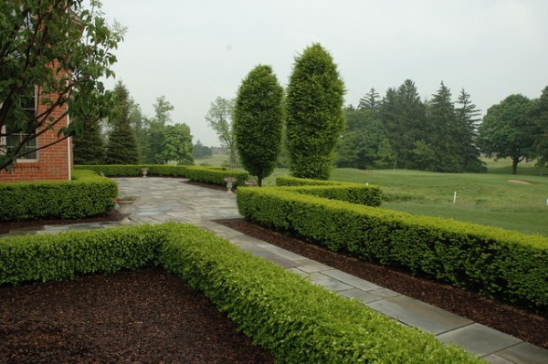 formal bluestone terrace with boxwood