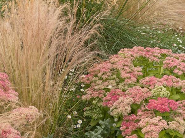 great garden combo 3 soft