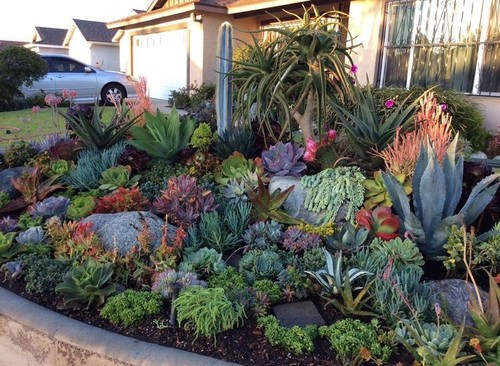 front yard succulent and cacti