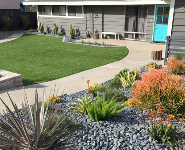 drought tolerant contemporary