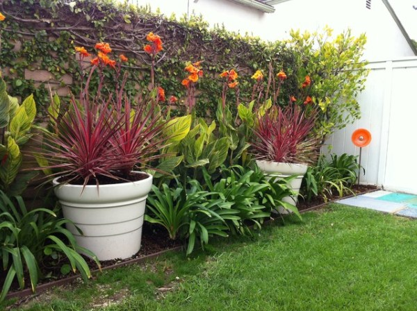 bright cordylines and cannas