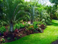 Tropical front & backyard landscapes....Palms & Color ...