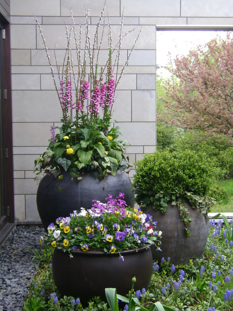 spring flower containers & annual