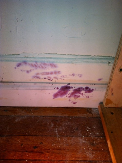 Pink mold on ceiling in bathroom for Mold removal bathroom ceiling