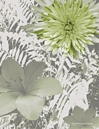 Lime Mum Floral Wall Mural - Contemporary - Wallpaper