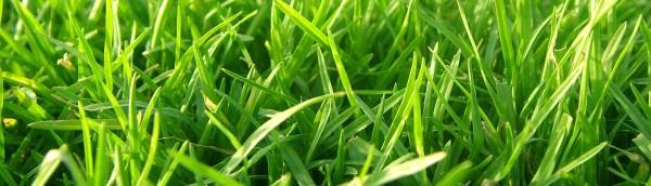 full service landscaping - schertz