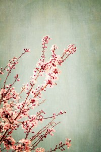 Painted Blossoms Wall Mural - Contemporary - Wall Decals ...