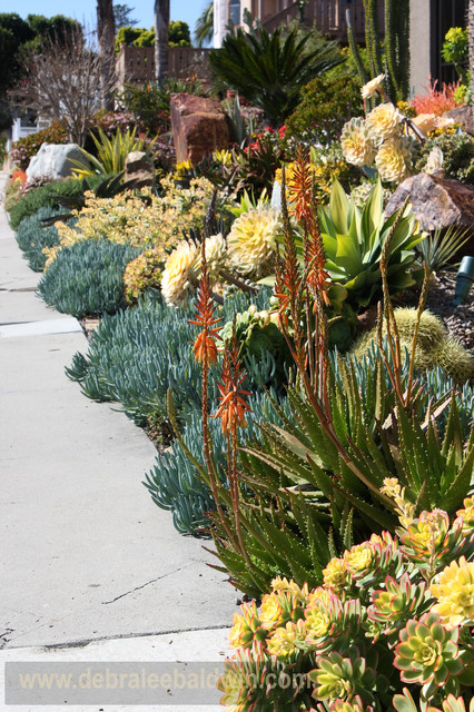 succulent gardens - eclectic