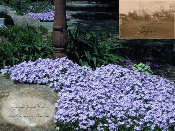 spring garden ground cover detail