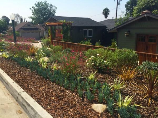 drought friendly plants - craftsman