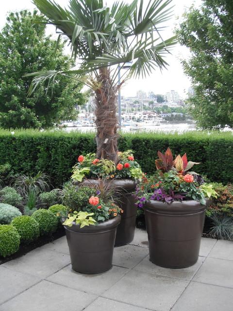 modern tropical patio garden