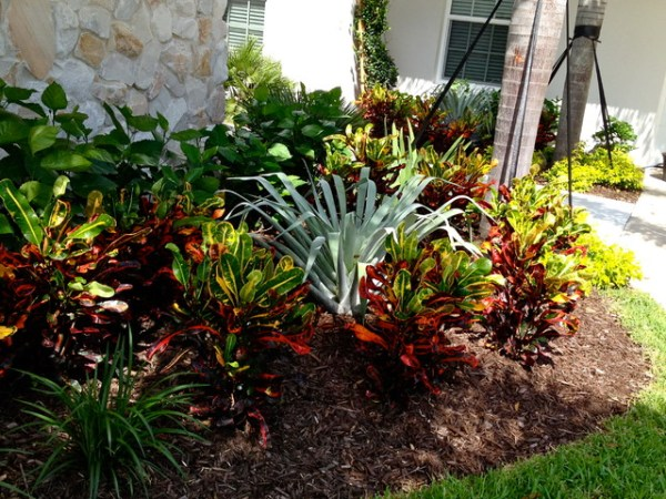bromeliad & croton planting