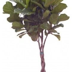 Contemporary Artwork Living Room Best Light Color For Walls Ficus Lyrata 'fiddle Leaf Fig' - Plants ...