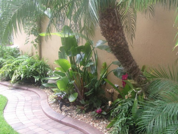 tropical florida - landscape