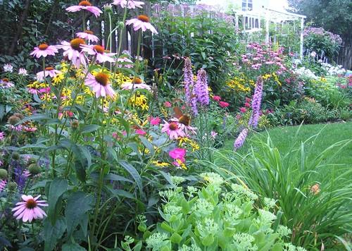 Backyard Perennial Garden