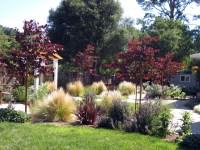 Mediterranean garden with curving pathways of DG and ...