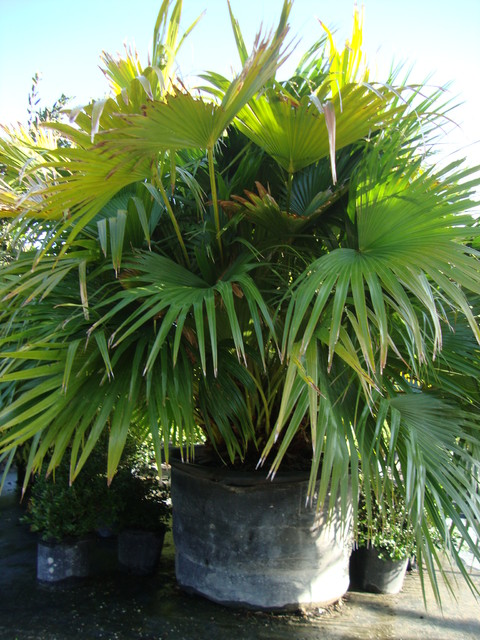 plants and palm trees - tropical