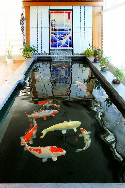indoor koi pond 101 Quick Tips About Indoor Koi Pond 1