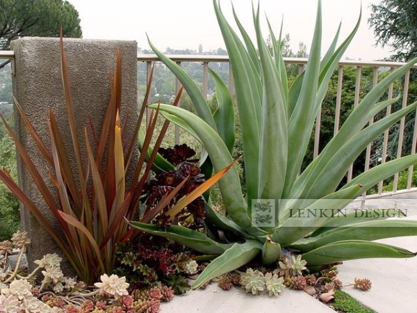 agave and succulent garden - modern