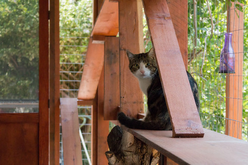 how to build a safe and stylish catio