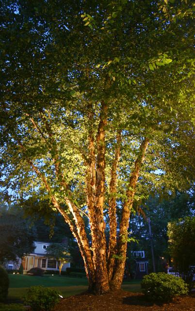 river birch tree lighting - traditional