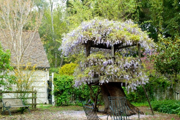 wisteria atherton fort - rustic