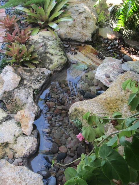 water garden pond - tropical