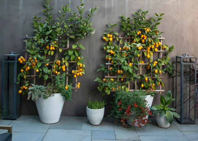 10 top trees to grow in containers
