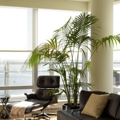 Living Room Tree How To Arrange Furniture In A Rectangular With Fireplace Palm Trees Take Interiors On Tropical Vacation